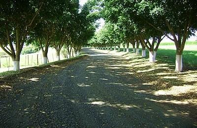 Fazenda para Venda em Tatuí SP – 01094 - Foto 13 / 31